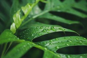 fond de texture de feuilles vertes avec des gouttes d'eau de pluie photo