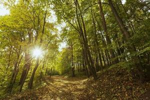 la lumière du jour du beau paysage paisible photo