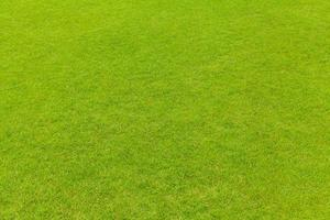 fond de texture herbe verte photo