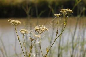 silhouettes d'herbes sauvages sur fond de ciel photo