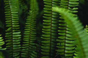 fond de feuilles de fougère dans la nature photo