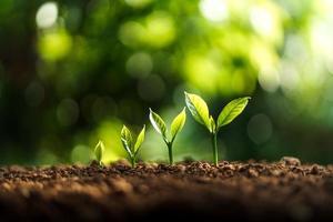 croissance des arbres dans la nature et beau matin photo