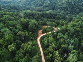 forêt verte sous les tropiques d'en haut photo