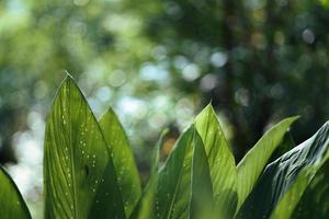 laisse le détail des feuilles vertes foncées dans le naturel photo
