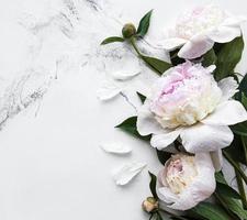 fleurs de pivoine sur fond de marbre photo