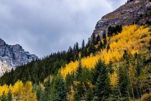 les couleurs d'automne dans toute leur splendeur le long de la promenade de la vallée de la proue. parc national banff, alberta, canada photo