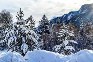 arbres couverts de neige le long de la route sur la promenade de la vallée de la proue. parc national banff, alberta, canada photo