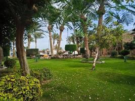 beau jardin verdoyant avec palmiers et buissons bouclés dans la ville d'hurghada, égypte photo