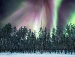 aurores boréales sur la forêt de pins sur la neige photo