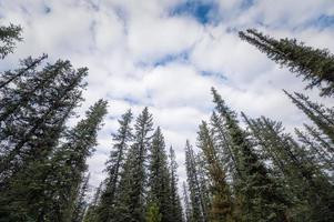 Cime des arbres de pin avec nuageux dans le ciel bleu photo
