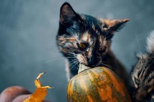 chats et une citrouille sur fond bleu. photo