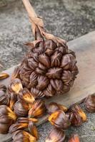 fruit du palmier nypa en thaïlande, gros plan de la graine nypa dans la nature photo