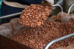 fèves de cacao fermentées et fraîches se trouvant dans la boîte en bois photo