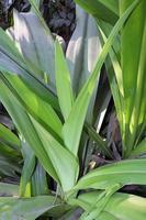 stock de feuilles de couleur verte sur jardin photo