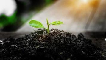 plante poussant au soleil. nouvelle vie. journée mondiale de l'environnement. photo