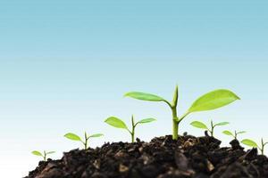 jeune plante poussant au coucher du soleil. sauver l'environnement ou le concept du monde de la planète terre. médias mixtes. photo