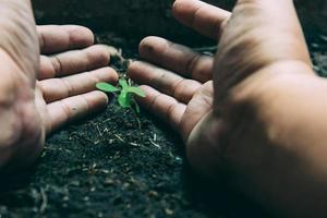 les mains protègent les plantes en croissance sur le globe. sauver le concept du monde de la planète terre. journée mondiale de l'environnement. photo