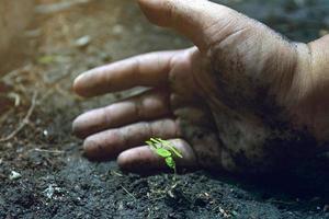 les mains protègent les plantes en croissance. sauver le concept du monde de la planète terre. sauver la nature. protection de l'environnement. arbre nourricier poussant sur un sol fertile. photo