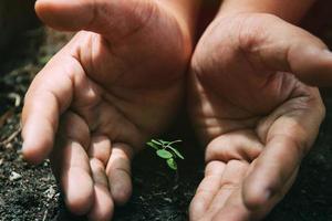 les mains protègent les plantes en croissance. journée mondiale de l'environnement. photo