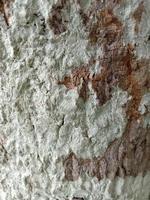 fond de texture en bois sur moulin à scie photo