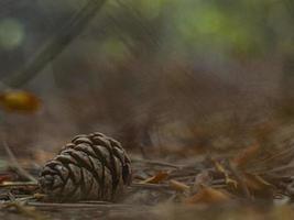 pomme de pin dans le feuillage d'automne dans la forêt photo