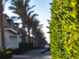 haie verte comme une clôture photo