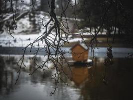 branche d'arbre sur un arrière-plan flou d'un étang avec une maison d'oiseau photo