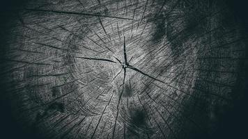 belle souche de bois sec. texture du bois fissuré photo