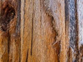 texture abstraite du vieux bois formée par le temps et la nature. fond de texture en bois photo
