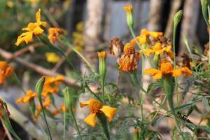 Gros plan de belle fleur de couleur jaune photo