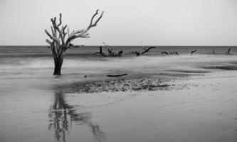 bois flotté et arbres délavés à la plage sur l'île de chasse photo