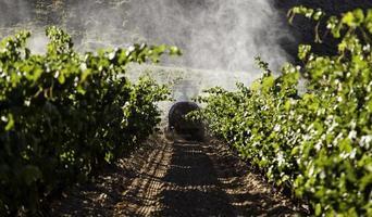 domaine viticole pour faire du vin photo