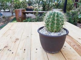 fleur de cactus poussant dans un pot. style créatif minimal. fond de texture de cactus épineux. photo