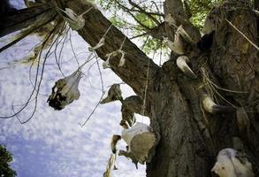 arbre avec des crânes d'animaux photo