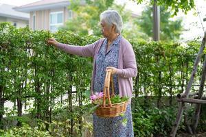 femme asiatique âgée ou âgée prenant soin du jardin dans la maison, passe-temps pour se détendre et faire de l'exercice avec plaisir. photo