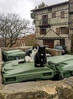 Deux chats affamés sur les poubelles du village de Mogarraz, province de Salamanque, Castille et Leon, Espagne photo
