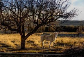 cheval dans le domaine en hiver, espagne photo