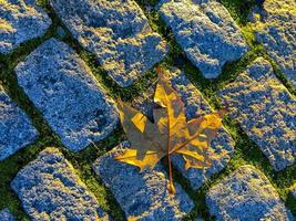 feuille d'automne sur un trottoir en pierre photo