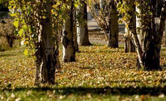 arbres et feuilles d'automne à madrid, espagne photo