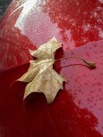 feuille d'automne dans le corps d'une voiture rouge photo