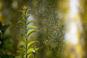 insectes nuisibles sur la végétation photo