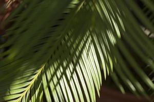feuilles de palmier dans un jardin en terrasse à madrid, espagne photo