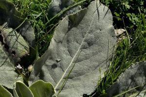 rosée du matin sur les plantes sauvages dans la province de soria, castilla y leon, espagne photo