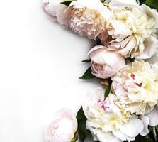 fleurs de pivoine sur fond blanc photo