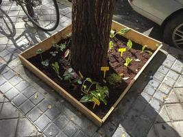 petits jardins urbains au pied des arbres à madrid, espagne photo