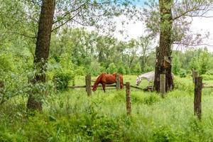 de beaux chevaux bien entretenus paissent dans une prairie de sélénium avec de l'herbe verte juteuse photo