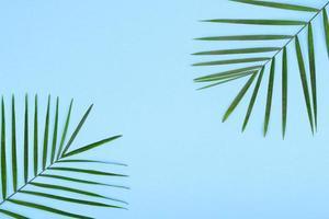 feuilles d'une plante verte sur un fond coloré avec une place pour le texte photo