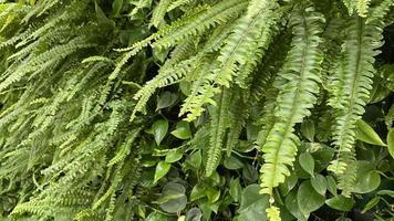 fond vert naturel avec des feuilles de fougère photo