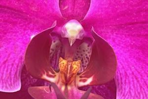 fleur d'orchidée en gros plan pour le fond photo