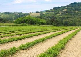 paysage naturel italien photo